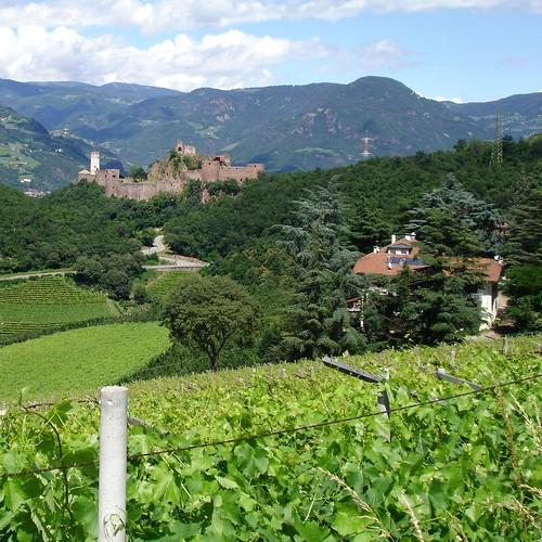 Weinberge bei Girlan mit Blick auf Burg Sigmundskron