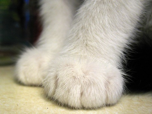 polly's paws