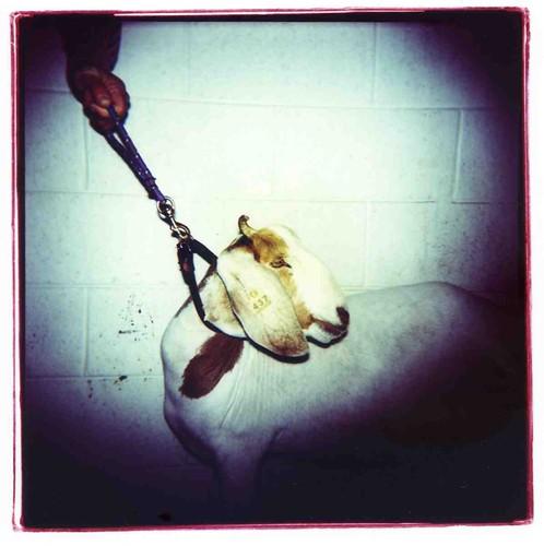 goat001.jpg