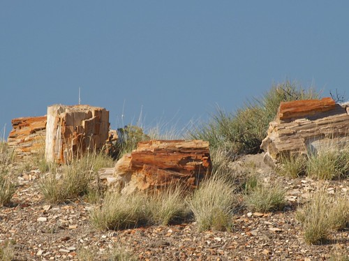 Petrified Logs in Petrified Forest National Park