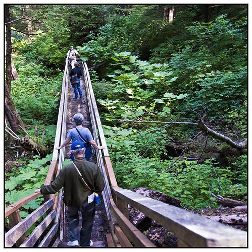 Rain Forest Path - Alaska