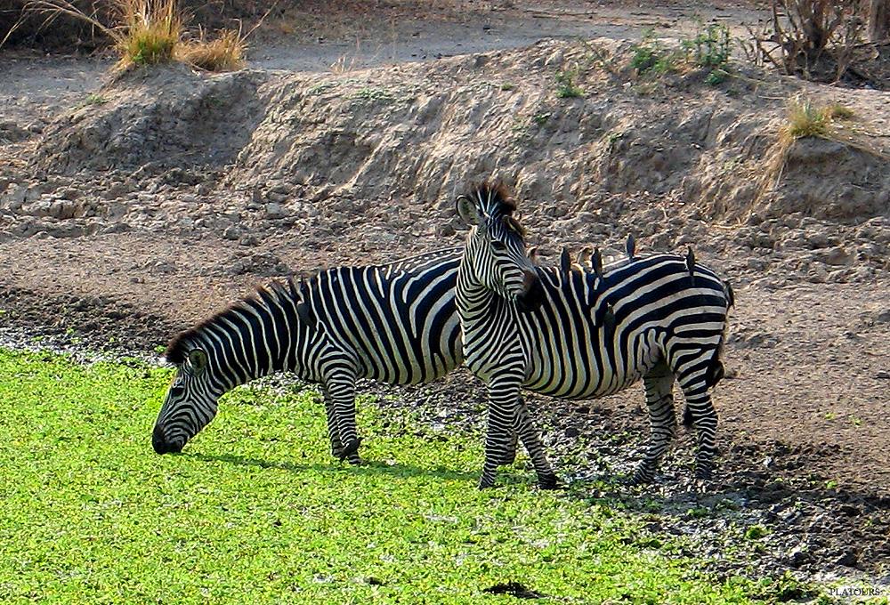 Fotos de Zambia the Real Africa