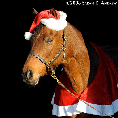 Santa Baby/Tack Store Lady (as sung by Wizard the Horse)