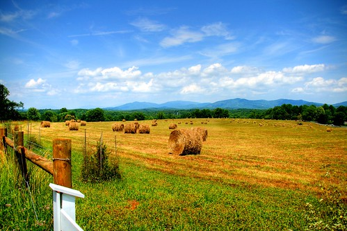 Hay-bales in the Field