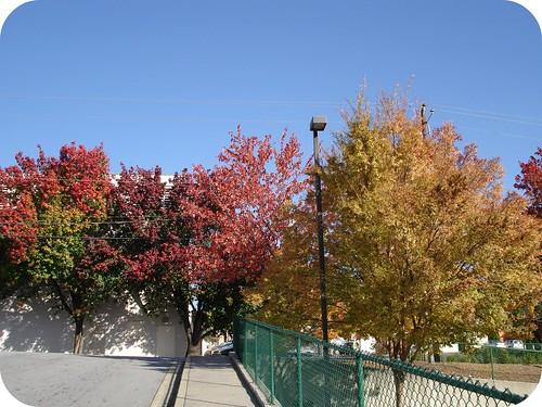 Fall Leaves in Atlanta