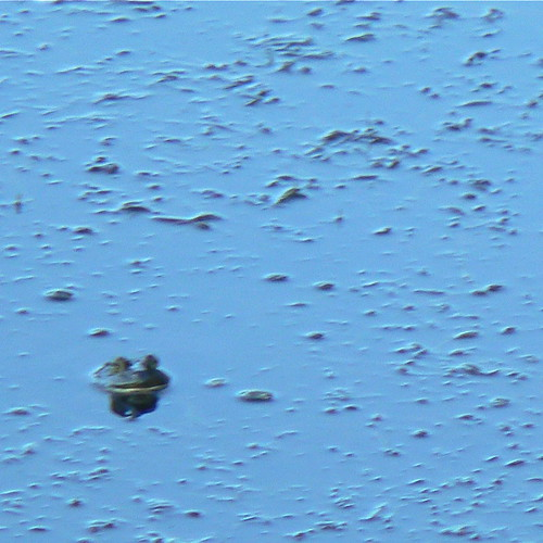 Noisy Frog