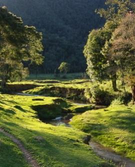Fluir para cambiar de vida puede llevarte a sitios tan bellos como el Parque Nacional da Serra do Itajaí