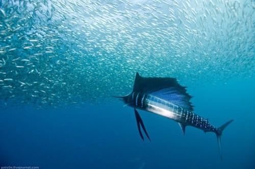 the sardine run #23