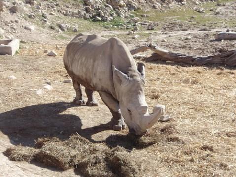 Rinoceronte en el Safari Aitana