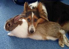 Batuh en Lou