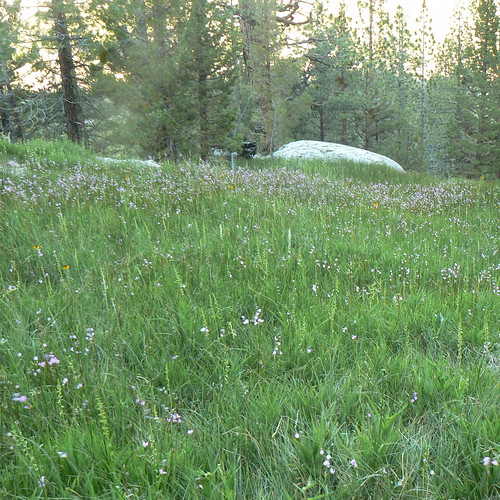 Super-Secret Meadow