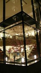 28.飯店裡面種的「櫻花」