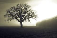 The Tree 44