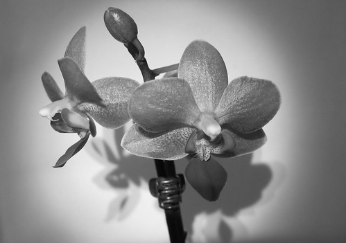 B & W Orchid