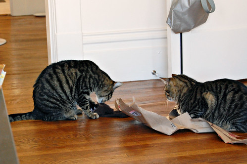 bad cat behavior, ep.6