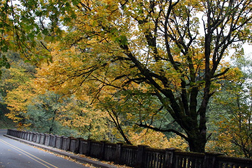 The Columbia River Gorge Scenic Highway near Latourell Falls-1