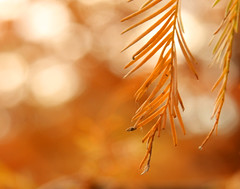 the amber glow of november's end (hbw 1)