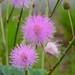 cheap pink flower