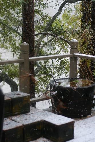 Snow day on the bayou