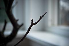 tree-20