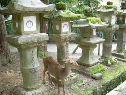 Ciervos y linternas de piedra