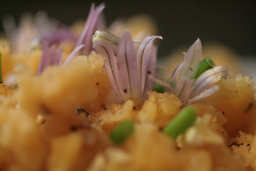 Close up of red lentils and blossoms