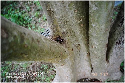 b-20080727_natura101_29.jpg