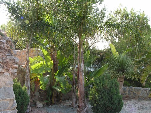 La selva oropesina