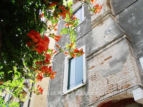 Venice  - flowers