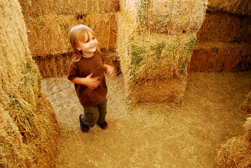 a boy in the hay maze
