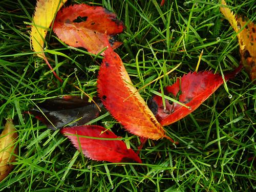Autumn in the garden