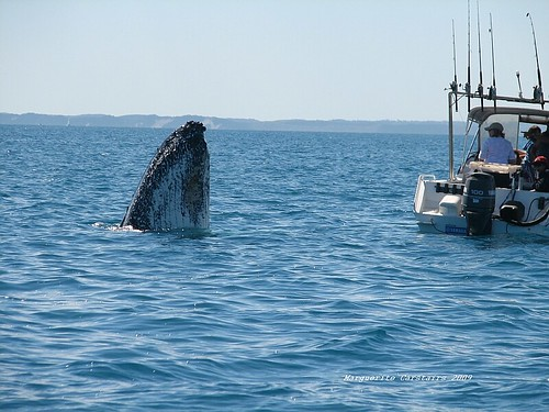 whale goes to look at small boat
