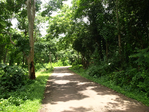 Sangolda village road (Goa, India) by you.