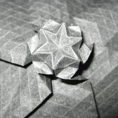 One Starflower