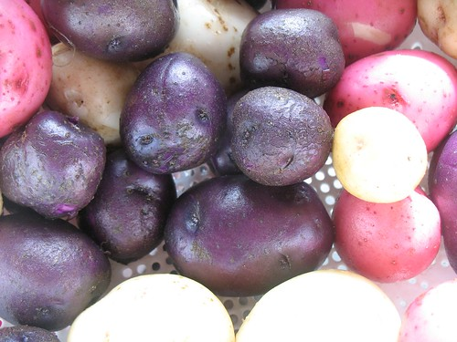 red, white and blue potatoes