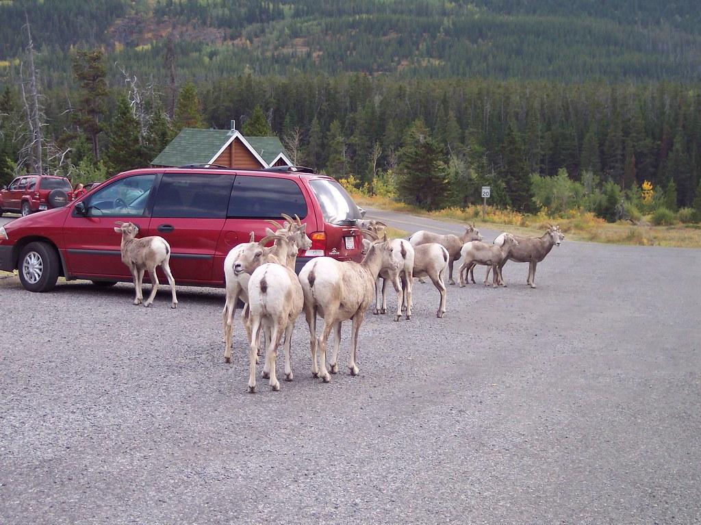 animals, Waterton National Park, Alberta, Canada