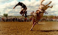 1886hbuckinghorse-6
