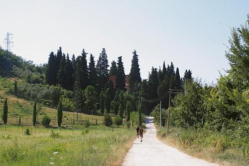 Road to Fattoria Settemerli