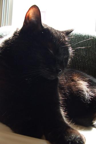 Zoe Sleeping In The Sun