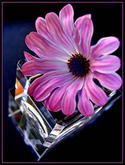 Daisy Over Glass