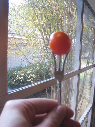 Fuzzy Fall Tomato