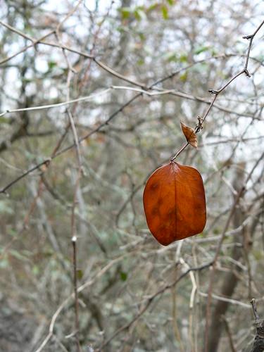 Sinking Creek Mountain - Lone Leaf