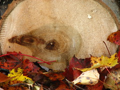 Turkey in the log