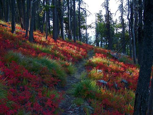 Fourteen mile trail, USFS 1714