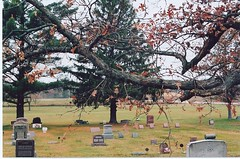 Branches in the graveyard