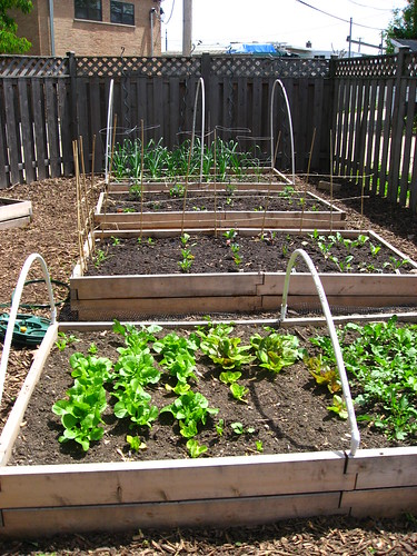 Four raised garden beds