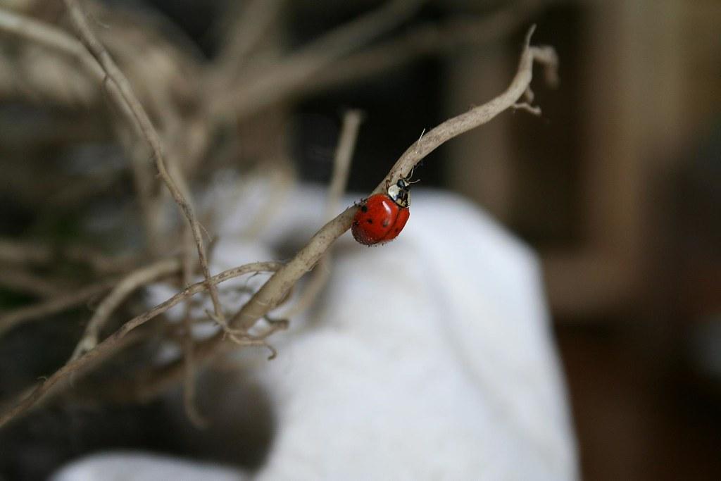 Oops! Ladybug!