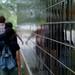 lsb.d40x_2008-09-13_4983