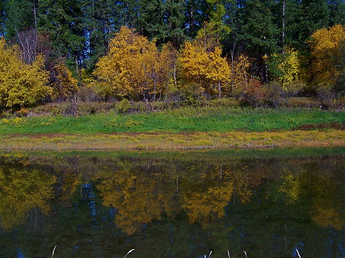 Autumn along the Clark Fork
