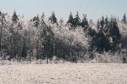 2008-12-13-ice-storm-day28
